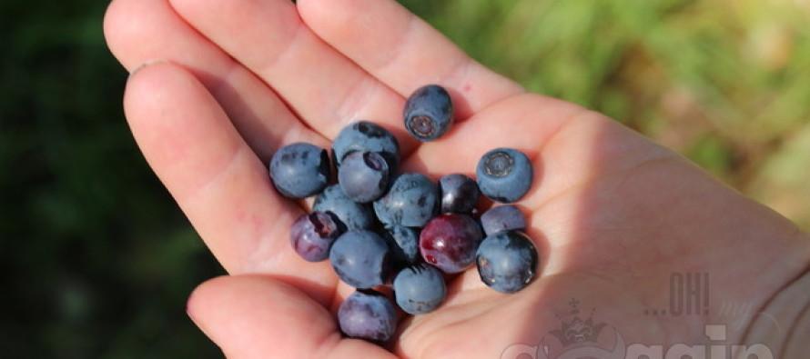 Dietoloog Andy Bellatti: Neli eksitavat uskumust toitumise kohta