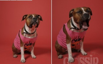 Koerad Trussardi ja Ohmygossip Couture'i kampaanias