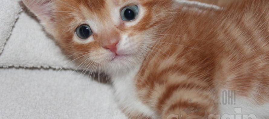 5 põhjust, miks eelistada koduloomaks kassi