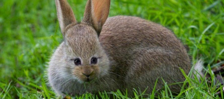 FOTOD! Kuidas oleks, kui nende loomade silmad poleks külgedel vaid ees? Armas või hirmuäratav?