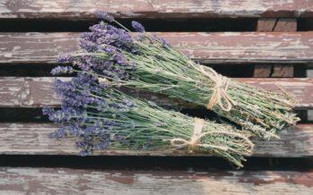3 KASULIKKU NÄPUNÄIDET, kuidas lavendlit ilurituaalides kasutada