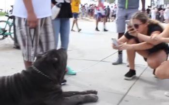 USKUMATULT suured koerad, kes päriselt on olemas